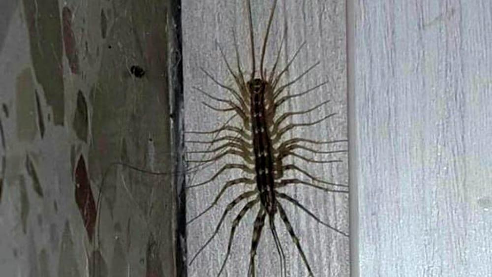 Come eliminare gli insetti dalla dispensa in modo naturale