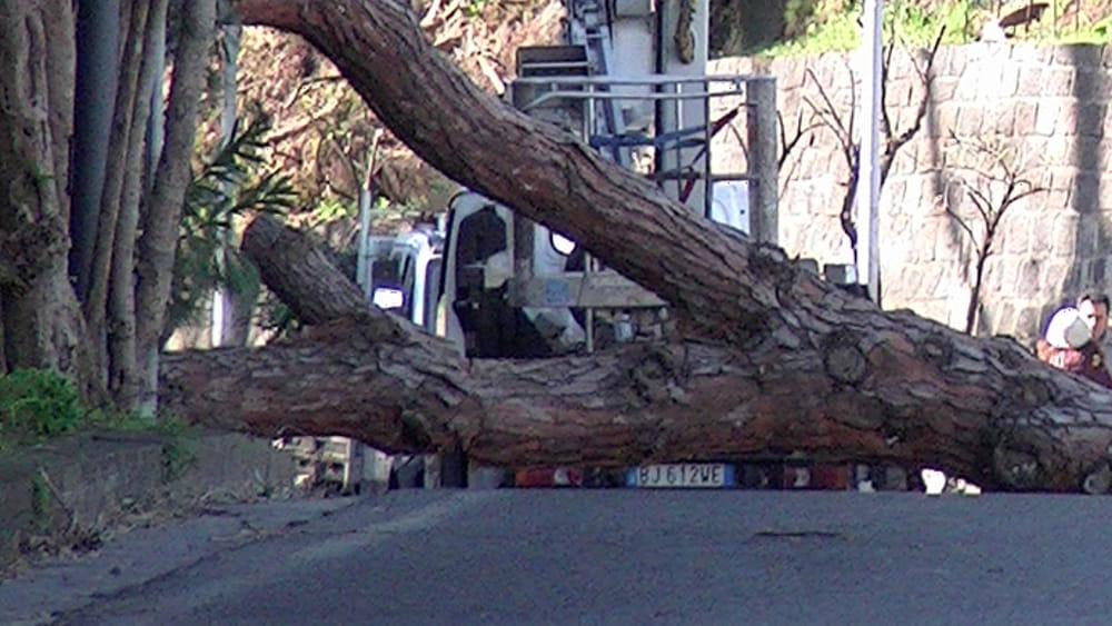 Risultati immagini per ischia crollo albero